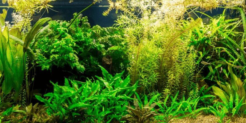 7 Reasons Why Your Aquarium Plants are Dying and How to Stop It!