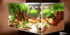 How Long To Leave Aquarium Lights on In a Planted Tank