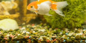 How Much Gravel Does An Aquarium Need