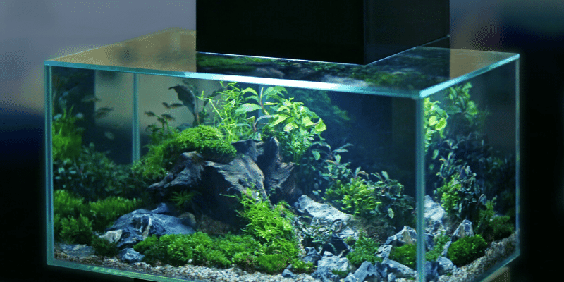 Why Does My Aquarium Smell