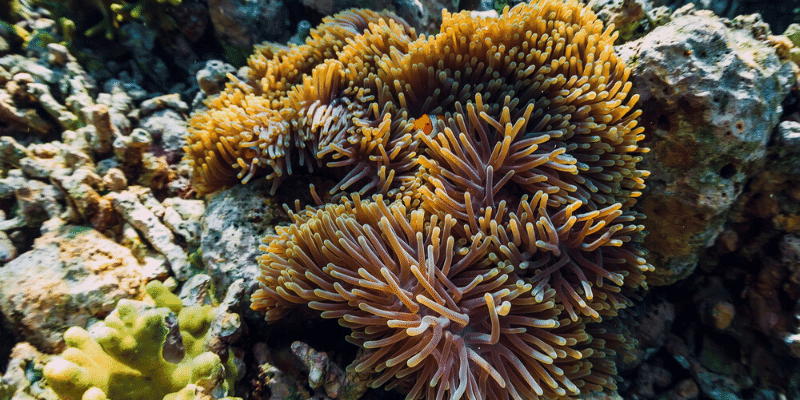 Can Crushed Coral Be Used in an Aquarium