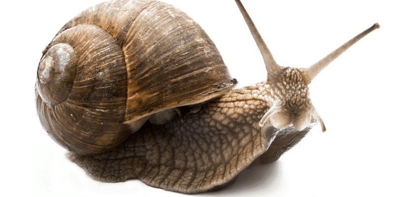 How to Get Rid Of Snails in an Aquarium