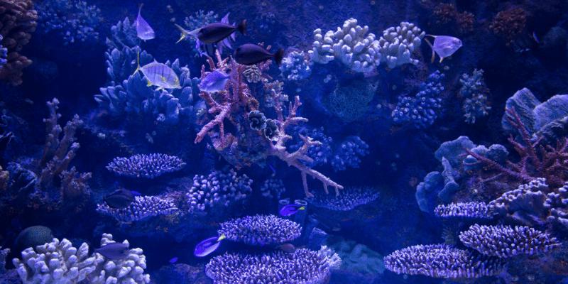 How to Keep an Aquarium Cool