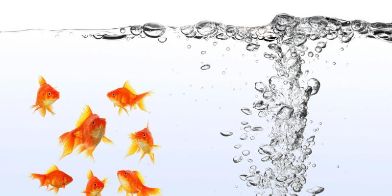 Should My Aquarium Filter Make Bubbles