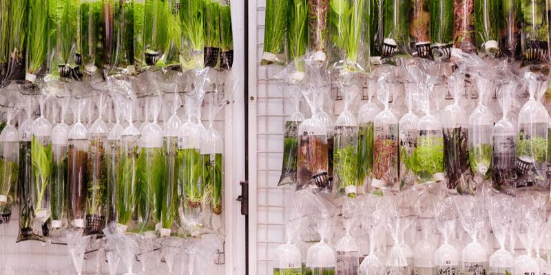 Should You Quarantine New Aquarium Plants