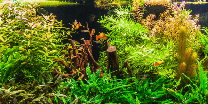 Can Any Wood Be Used In An Aquarium