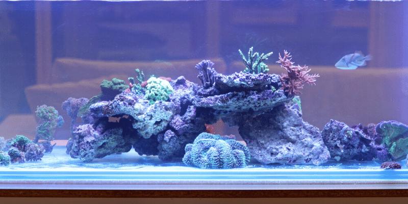 How to Clean Fish Aquarium Rocks