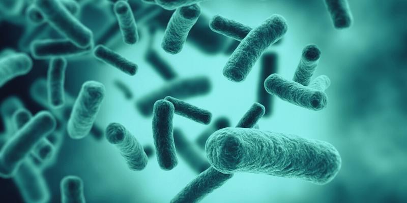 How to Get Beneficial Bacteria in Fish Aquarium