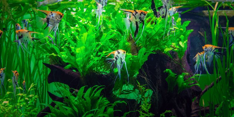 How to Protect Aquarium Plants from Fish