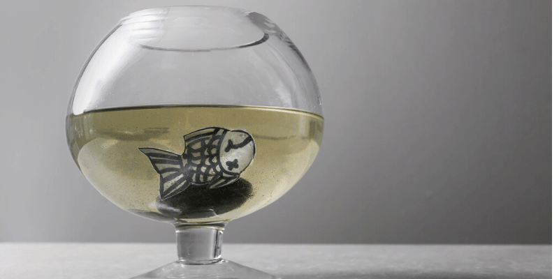 How to Remove Phosphates for Fish Aquarium