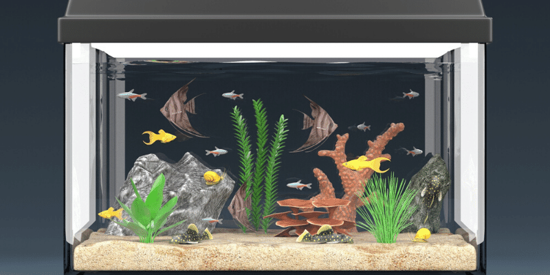 What Is the Best Thing to Put in an Aquarium for Fish to Play on