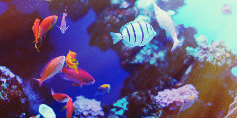 How Would a Saltwater Fish Respond in a Freshwater Aquarium