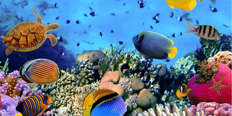 Most Peaceful Community Fish for Aquarium