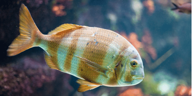 What Are Signs of Old Age in Aquarium Fish