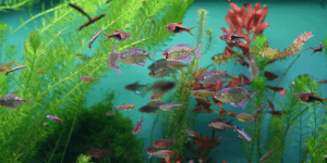 5 Aquarium Fish that Eat Fungus