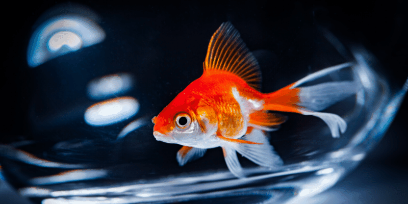 How Long Does it Take to Acclimate Fish to an Aquarium