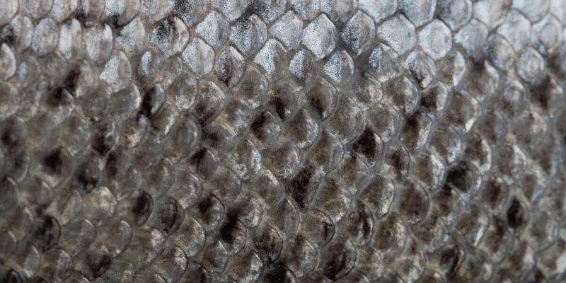 What Aquarium Fish Don't Have Scales