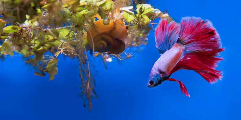 Do Betta Fish Need Darkness To Sleep Aquarium Sphere