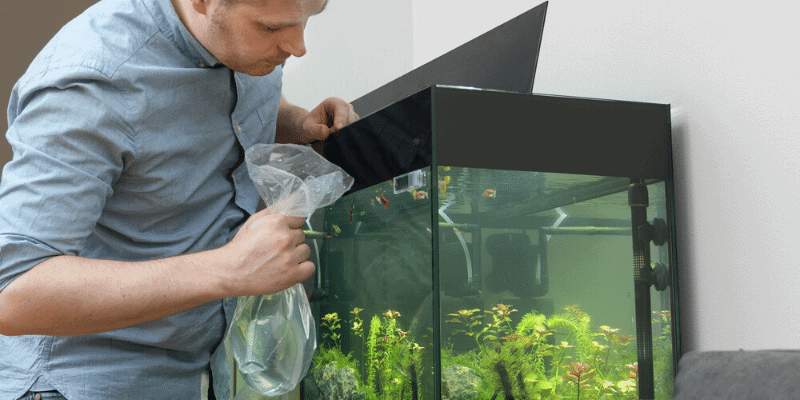 How to Catch Aquarium Fish without a Net