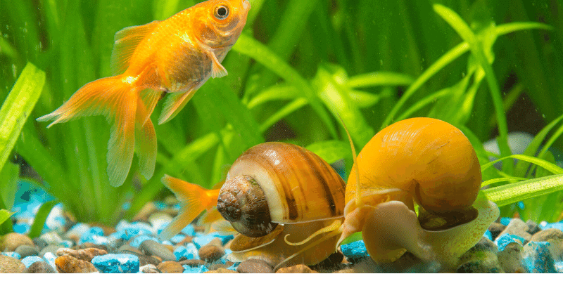 How to Tell if Snail is Dead or Sleeping in the Aquarium