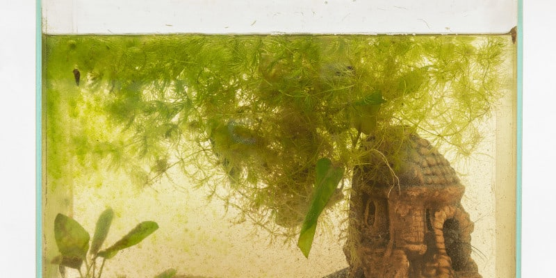 How to Remove Silicates from Aquarium Water
