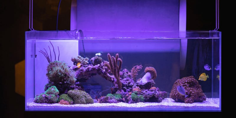 What Color Lights Do Fish Like