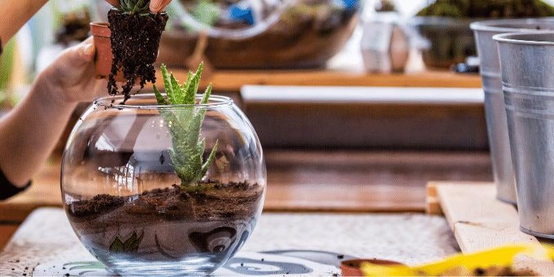 Can Terrariums be Used as Aquariums
