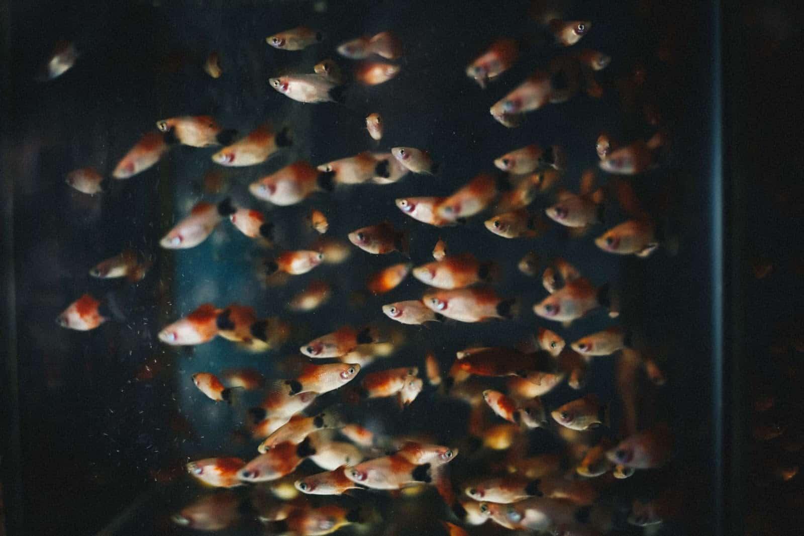 fish in an fish tank