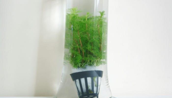 How Long Can Aquarium Plants Live In Bag