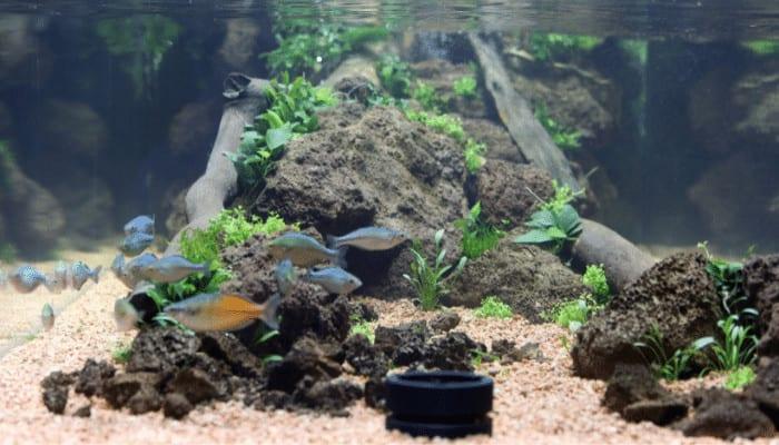 How to Acidify Aquarium Water