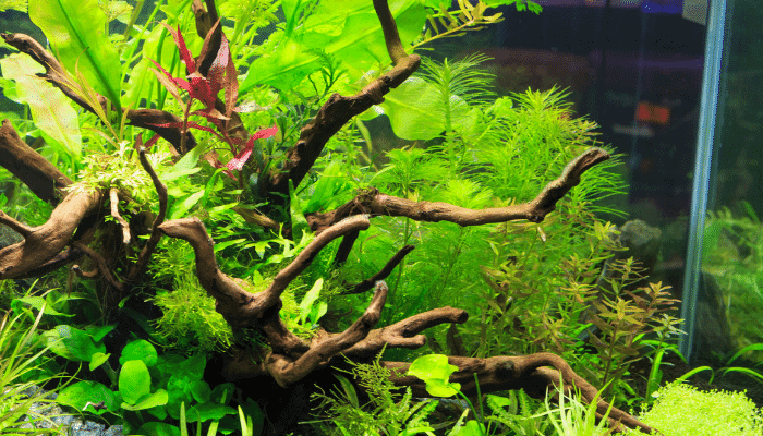 Why Are My Aquarium Plants Turning Brown