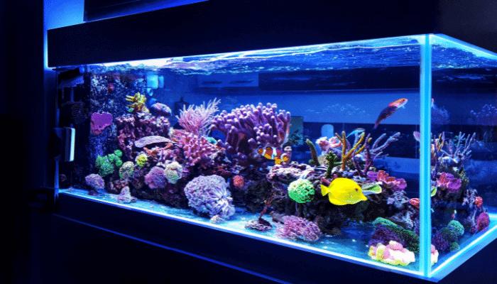 How to Reduce Aluminum in Your Aquarium