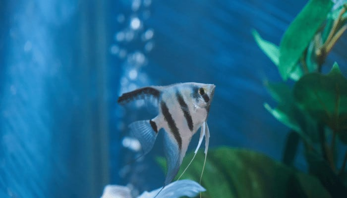 How to Remove Tannin from Aquarium Water